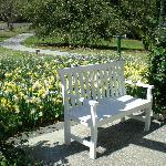 Garden bench, flanked w/ daffodils