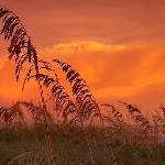 Seagrass Silhouette