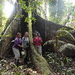 On the Yasuni Forest Hike under a giant Kapok tree