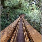 85' long Walk Bridge