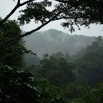 Misty jungles of Bwindi - gorilla habiat