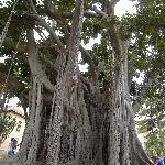 Jardin à Palerme