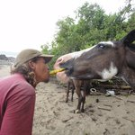 El Pinto Horseback Riding Expeditions