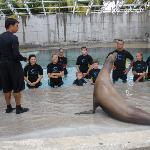 sealion encounter at Atlantis