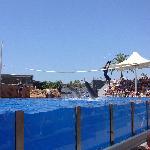 saltar con los delfines