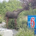 Photo de Motel 6 Anchorage Midtown
