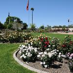 The Rose Garden at MCC