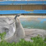 Sea Lions at Sea Life Park