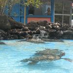 Sea Turtles at Sea Life Park