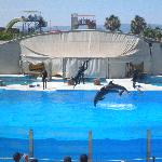 Dolphin show at Aquapolis