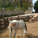 Horse relaxing in front of house