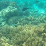 Corals.2