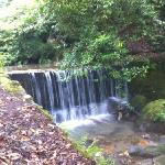 waterfall at end of the garden x
