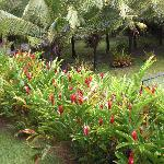 Garten im Perla Negra