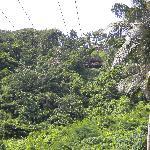View of zipline from below (finish line)
