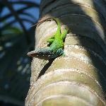 Un delizioso camaleonte nel patio dell'Hostal Florida Center