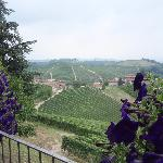 View from the tasting area of Boffa's in Barbaresco