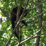 Fauna a simple vista en el Boulevar del Playas del Coco