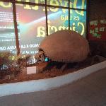 2-Museo  Ciencias Naturales