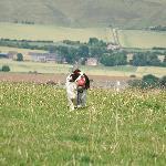 Smeaths Ridge, Barbury Castle