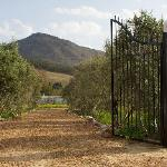 View through gate, over groves