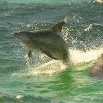 Jumping the wake!