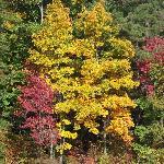 Beautiful trees by Turkey Creek