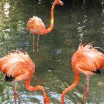 Flamingos in a shallow lake