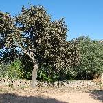 tree cork