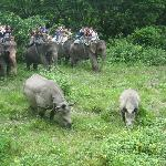 front view of rhinos whilst everyone else saw only the backs!