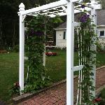 trellis in front of the office
