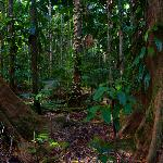 Daintree Rainforest (gondwana)