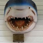 Sharkie above the side porch door.
