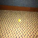 popcorn left on floor by previous guests