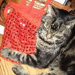 My cat is happy that I'm back and even he likes India as he holds my indian bag...