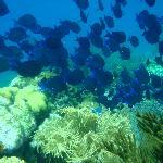 Paradise Island lush marine life