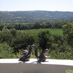 Overlook from Gardens
