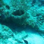 Buceo en el Arrecife Palancar. Cozumel. Mexico