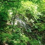 Dunnings Spring Park