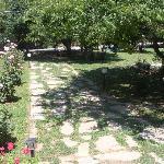 Yengec garden