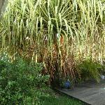 végétation fabuleuse