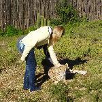 cheetah stroking