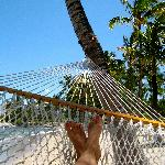 favorite hammock