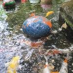 Koi pond and art