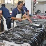 poissons sabres et thons rouge