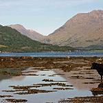 Cooling down, Loch Creran