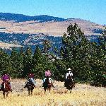 Horseback Riding and Riding Lessons