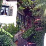 ingresso Saxifraga
