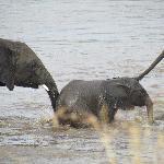 Foto de Serengeti Bushtops Camp