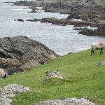 The Achill Coast Road- Atlantic Ocean side